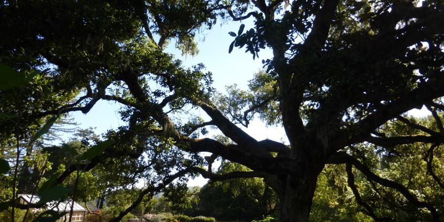 Pacific Slope Tree Company