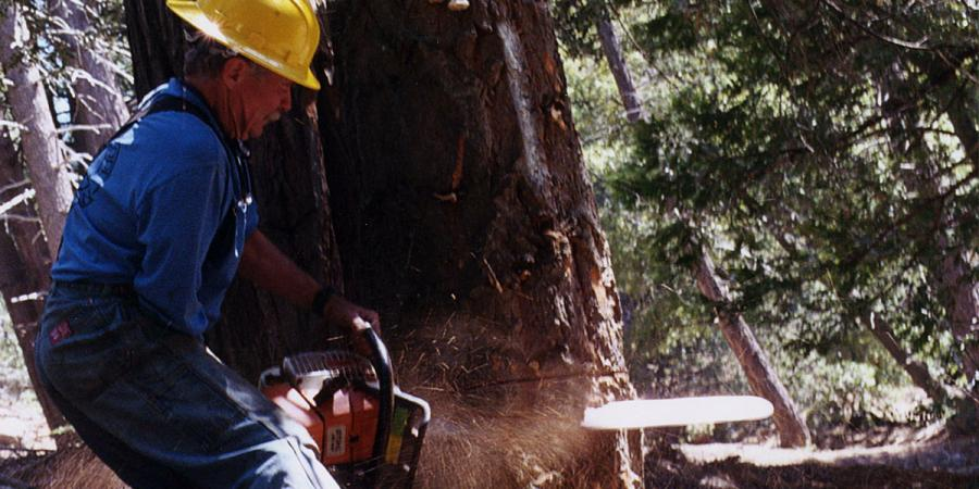 Pacific Slope Tree Company