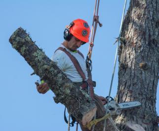 Pacific Slope Tree - Members
