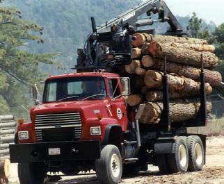 Pacific Slope Tree Company - Marin County Arborists