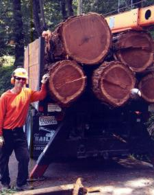 Soren Nordstrom, Pacific Coast Tree Cooperative